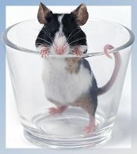 Η Ποντικοπαγίδα