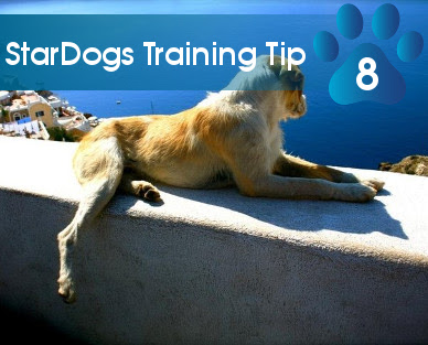 training tip 08